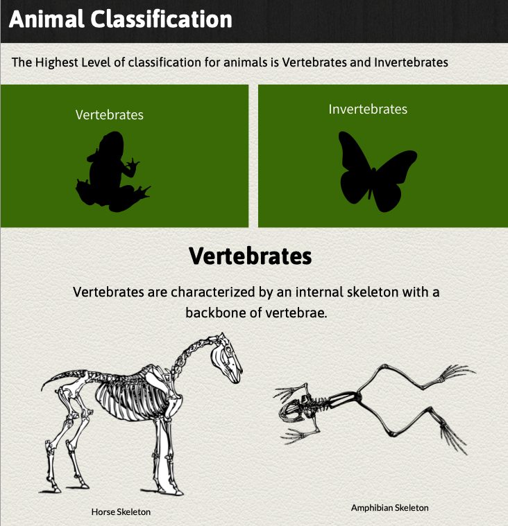 Animal Classification Lesson Preview