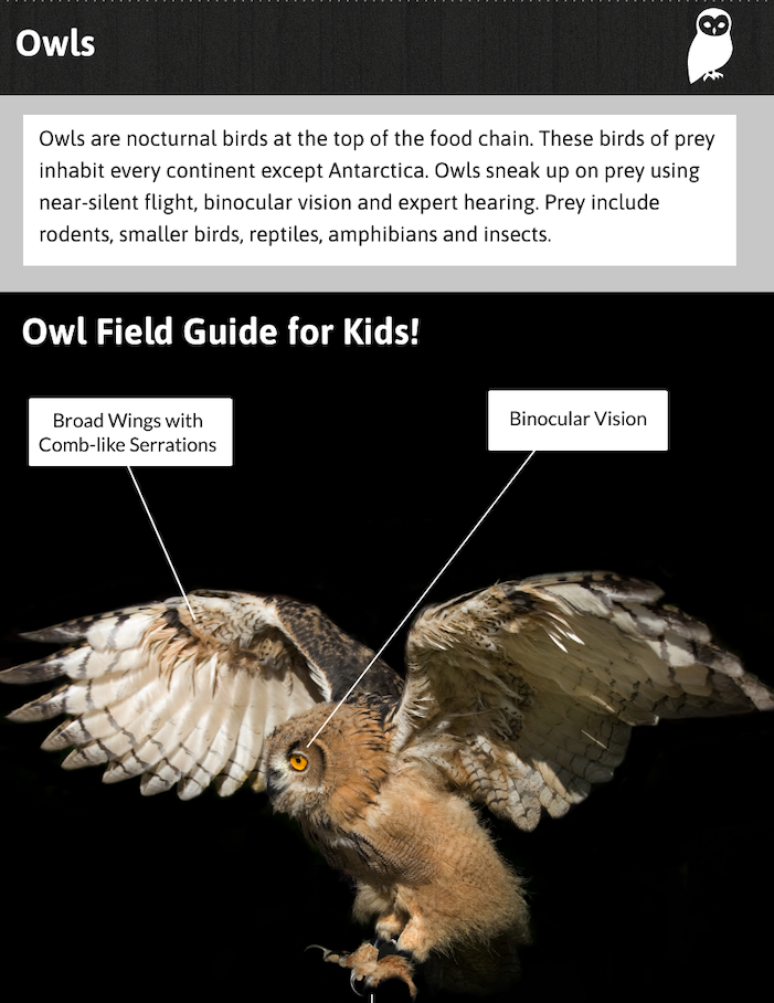 Owl Lesson Preview