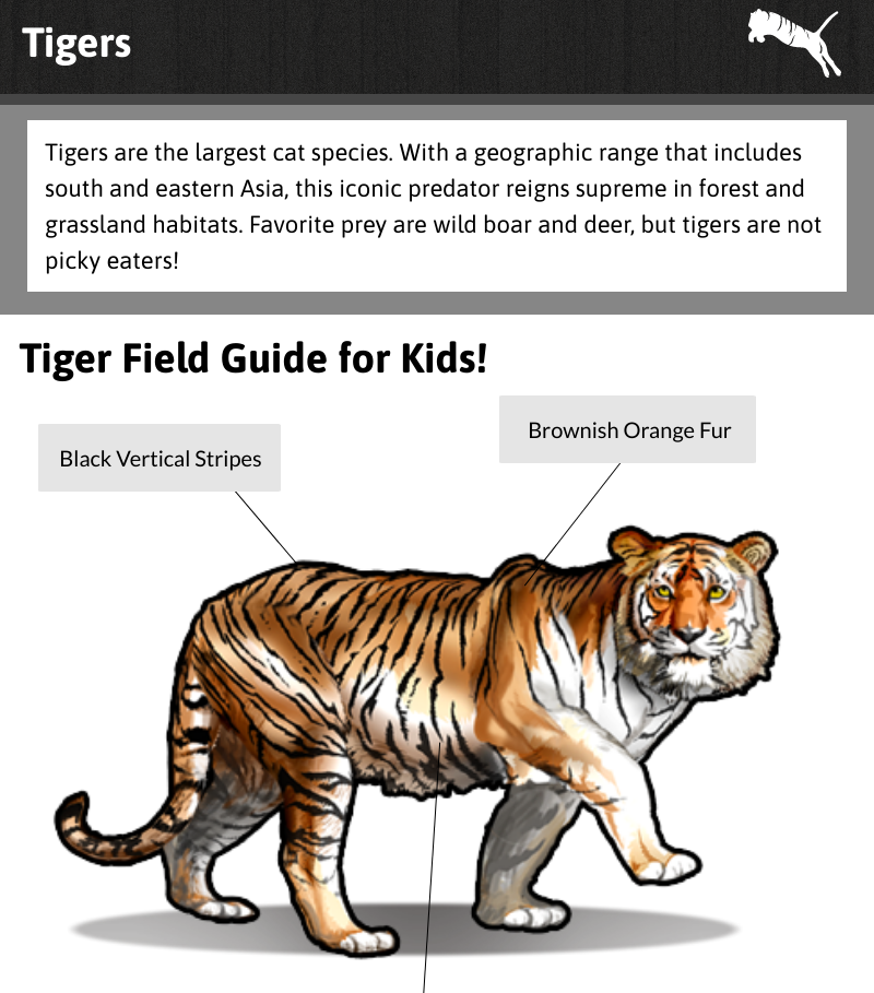 Tigers Lesson Preview